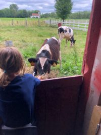 girl and cows