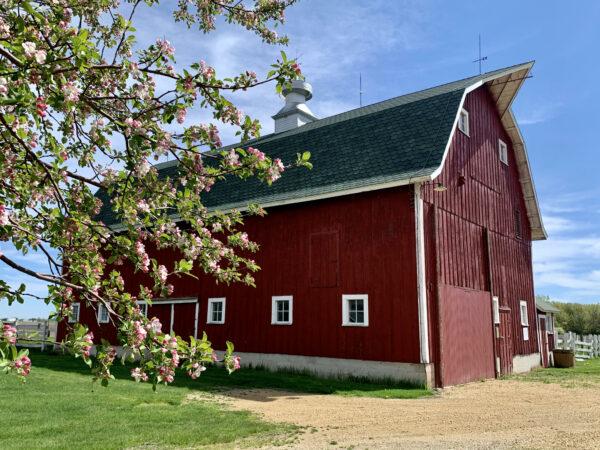 1930s Dairy barn