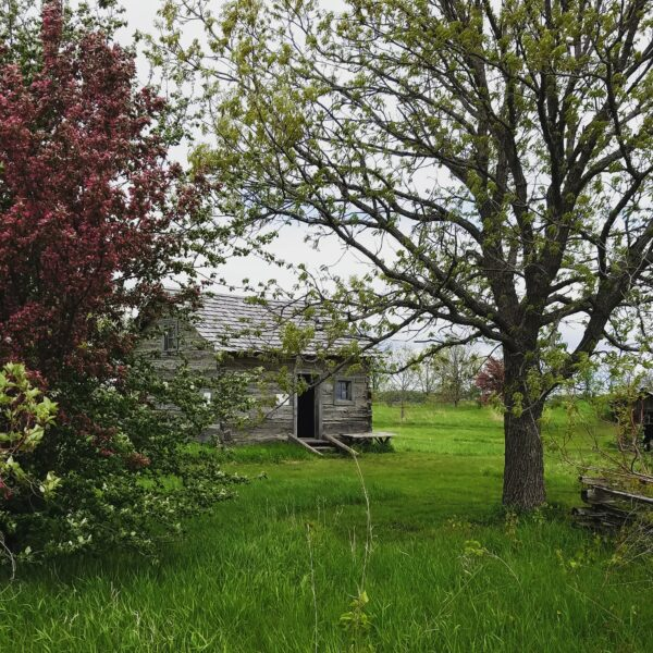 Historic Log Cabin in the spring
